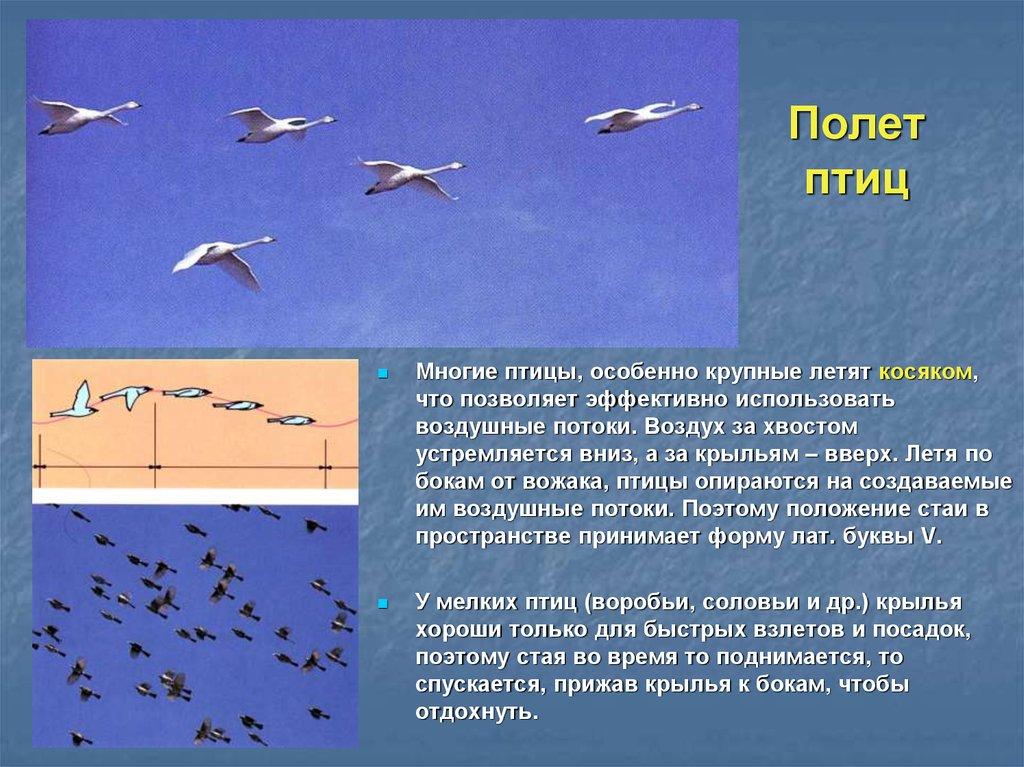 """Проект """"почему летают птицы?"""" — orenwiki"""