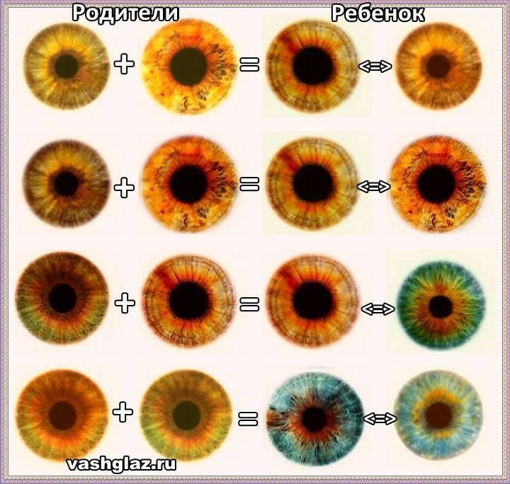 Почему глаза-хамелеоны меняют цвет?