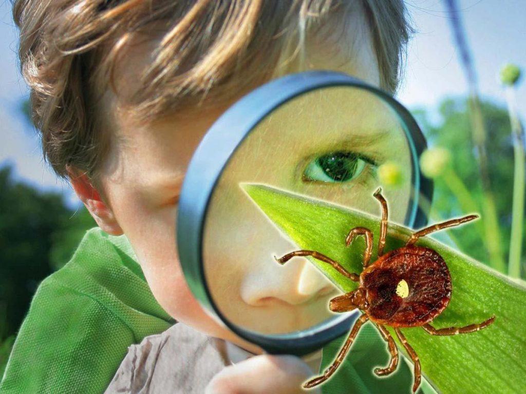 Почему ребенок до истерики боится насекомых и как побороть страх, что делать