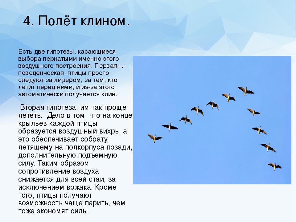 Нод по познавательному развитию «что мы знаем о перелетных птицах?»