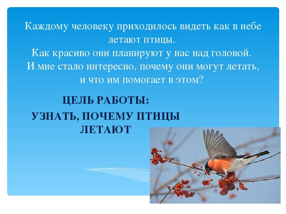 Конспект занятия по опытно– экспериментальной деятельности «почему летают птицы» | дошкольное образование  | современный урок