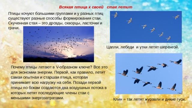 Курица не птица, потому что не летает. или все же летает? разбираем способность птицы к полету