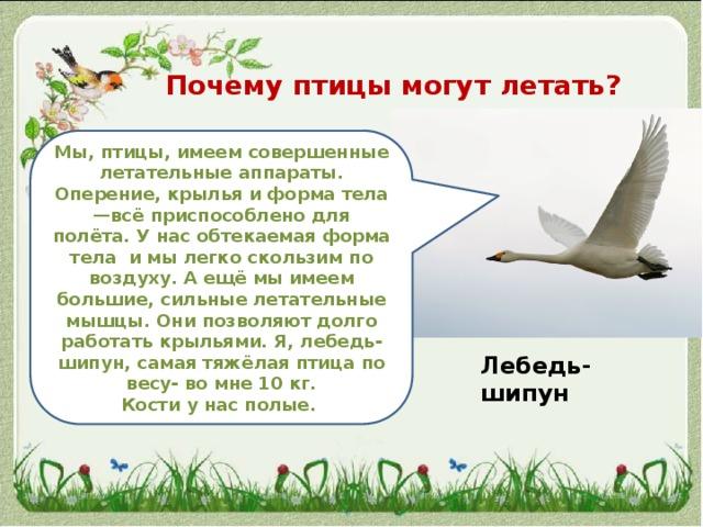Конспект интегрированной нод в средней группе «как птицы летают». воспитателям детских садов, школьным учителям и педагогам - маам.ру