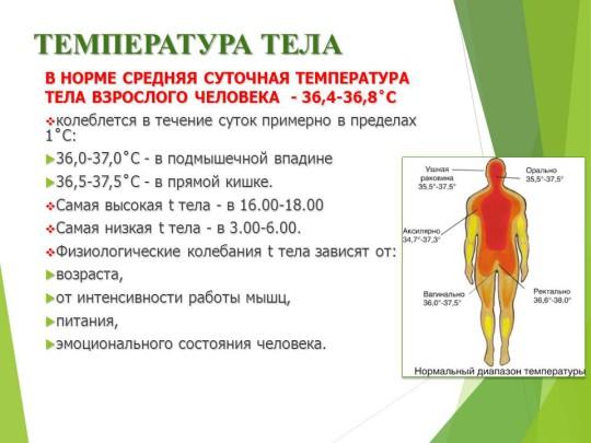 Температура тела - нормальная, повышенная и пониженная | университетская клиника