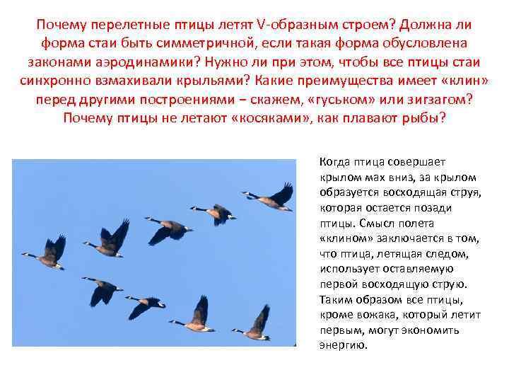 Беседа с детьми и зимующих и перелетных птицах