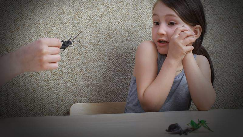 Ребенок боится мух: как ему помочь?
