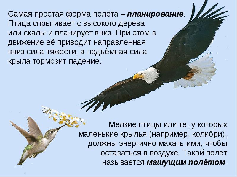 Занятие по экологическому воспитанию с использованием технологии проблемного диалога «почему птицы летают»