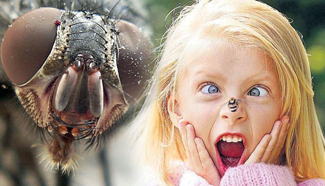 Почему ребенок боится насекомых?