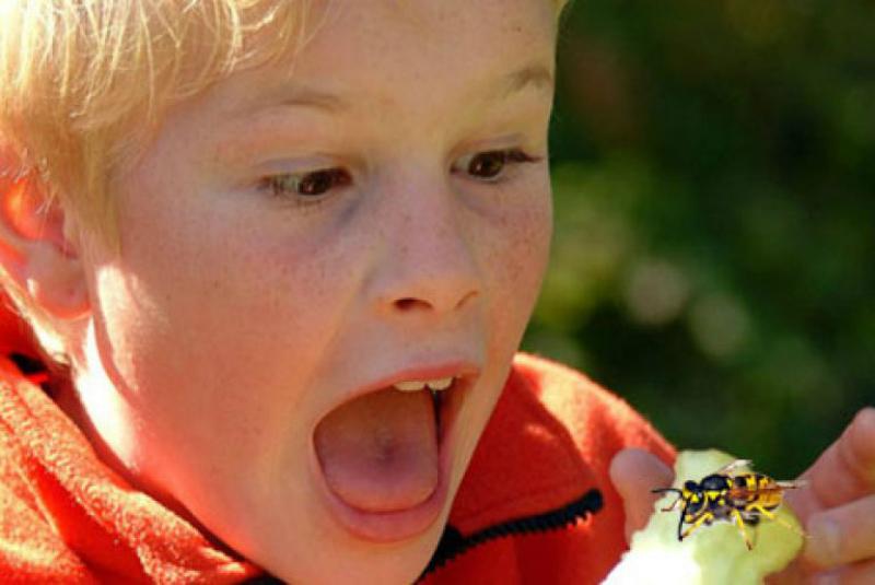 Ребёнок боится насекомых: как вести себя родителям
