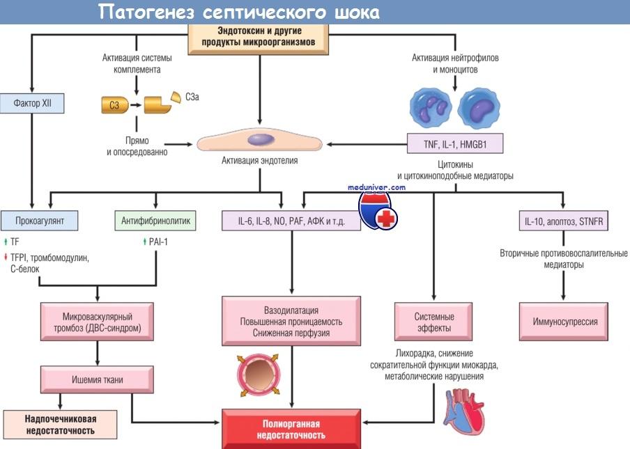 Гнойно-воспалительные заболевания и сепсис у новорожденных и детей раннего возраста