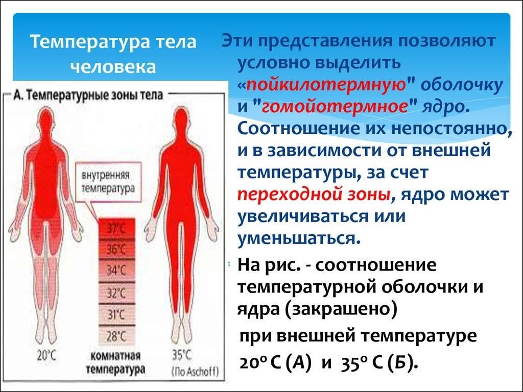 Субфебрильная температура у детей – норма или патология?