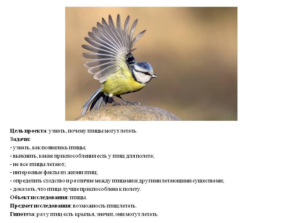 Почему птицы сталкиваются с самолетами? - hi-news.ru