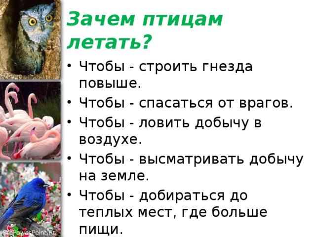 Нод по познавательному развитию «что мы знаем о перелетных птицах?». воспитателям детских садов, школьным учителям и педагогам - маам.ру