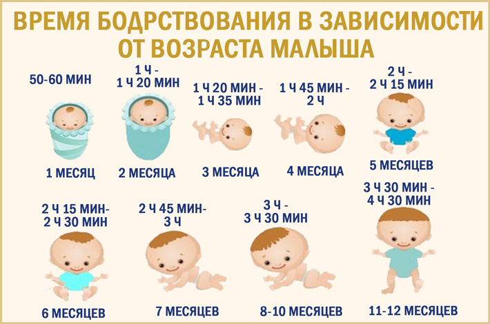 Сколько спит малыш в 9 месяцев | главный перинатальный - всё про беременность и роды