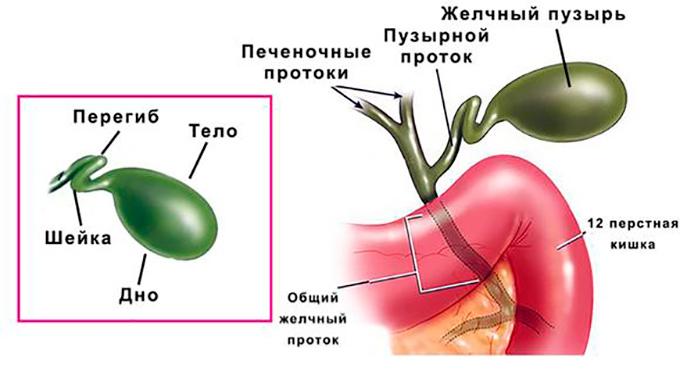 Как болезни жкт влияют на состояние кожи человека