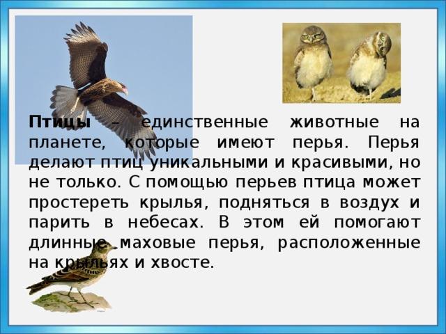 Миграция птиц — почему, когда, куда и как улетают птицы — природа мира