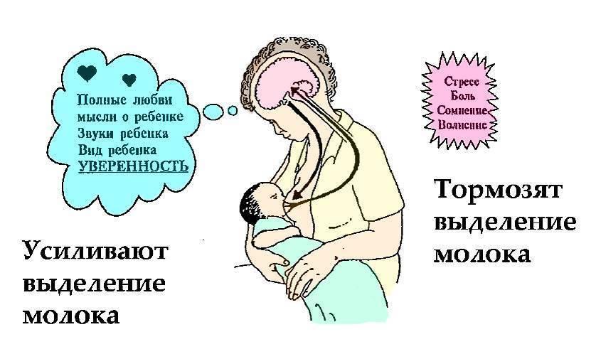Как наладить грудное вскармливание по требованию - agulife.ru