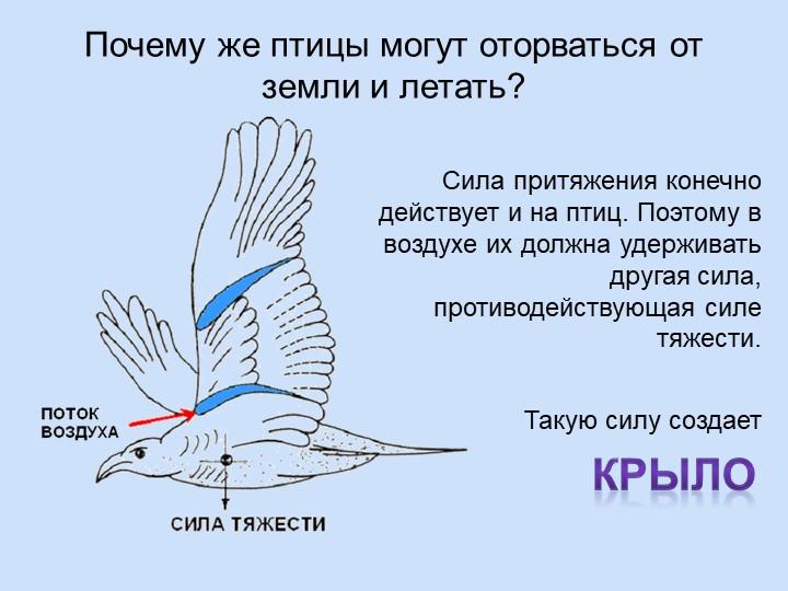 Занятие по экологическому воспитанию с использованием технологии проблемного диалога «почему птицы летают». воспитателям детских садов, школьным учителям и педагогам - маам.ру