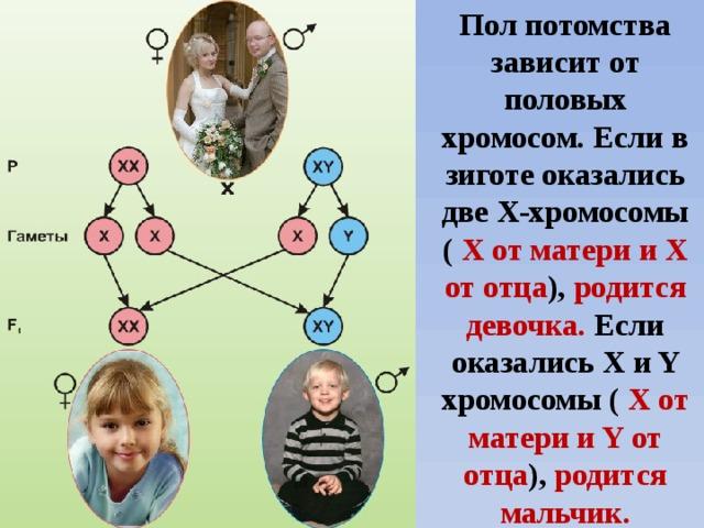 Какие генетические черты дети берут от мамы, а какие - от папы