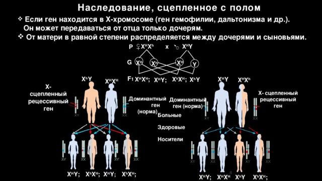 Какие болезни передаются от матери к сыну ~ детская городская поликлиника №1 г. магнитогорска