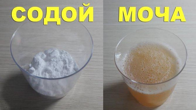 Определение беременности с помощью соды: насколько это точный метод? :: syl.ru
