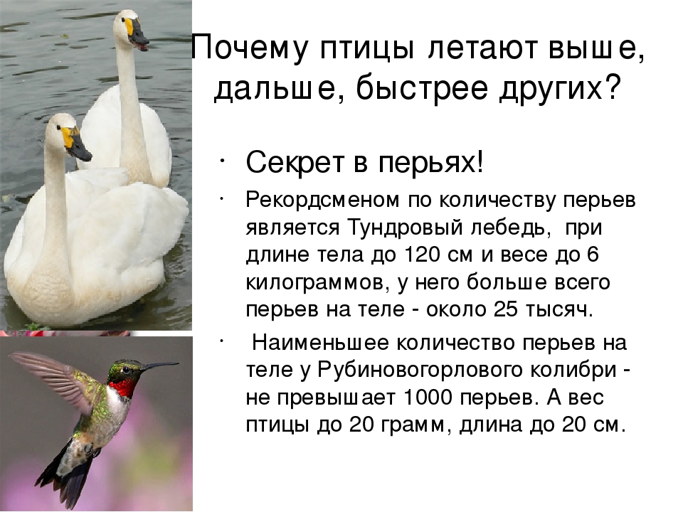 Викторина для детей 5–7 лет «птицы». воспитателям детских садов, школьным учителям и педагогам - маам.ру