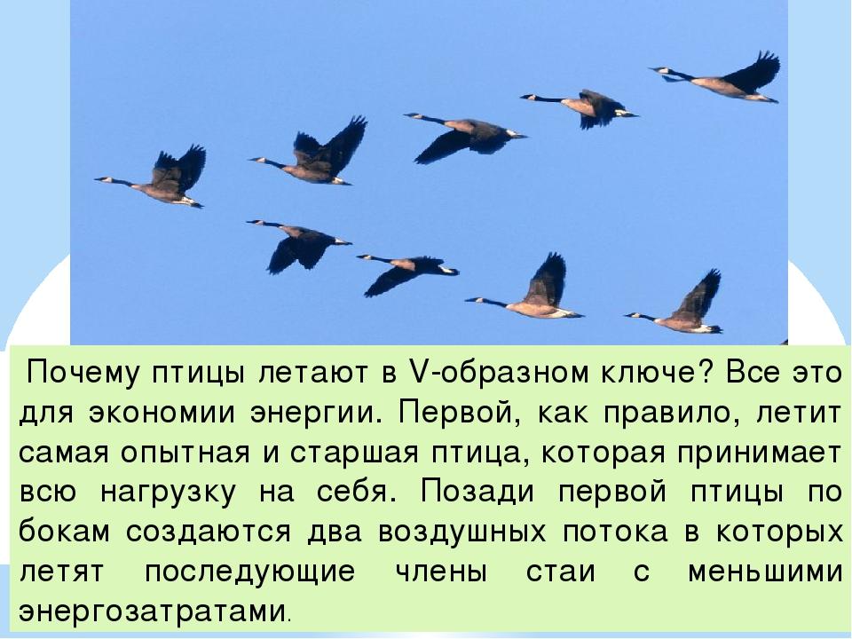 Почему летают птицы (как объяснить ребенку 3-5 лет)