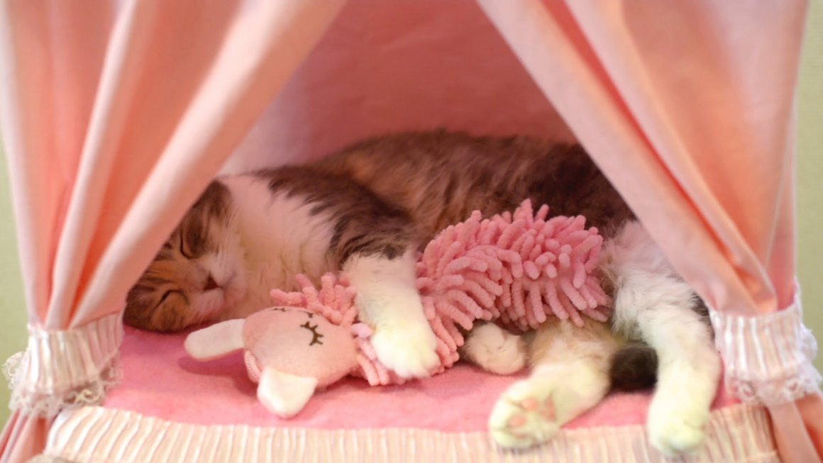 Кошка спит на спине: наблюдаем за животным и изучаем