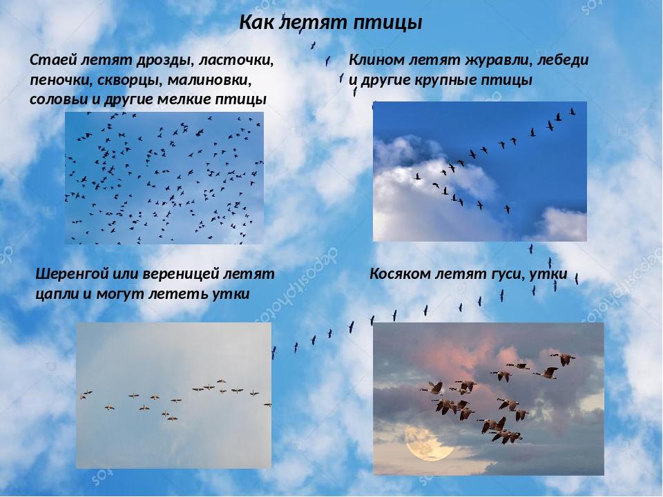 Как птица летает?