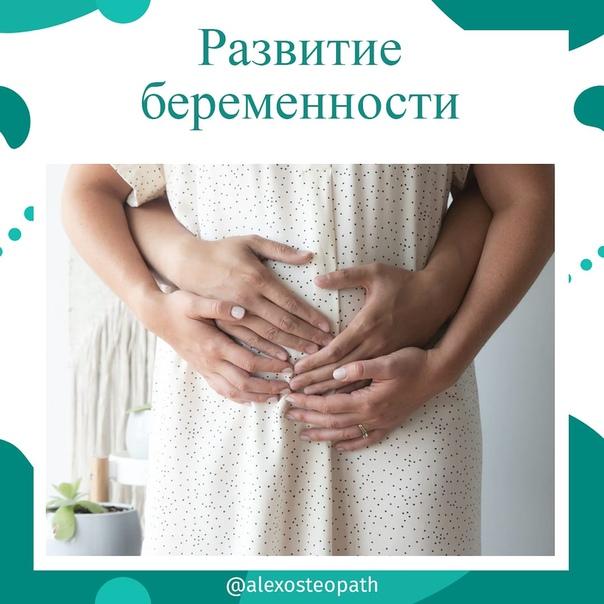 Второй триместр беременности: что нужно знать женщине