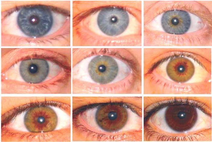 Как выглядят глаза-хамелеоны? «ochkov.net»