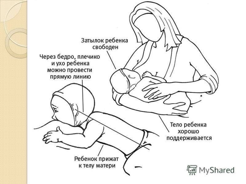 Что нужно знать маме о грудном вскармливании | как правильно наладить кормление грудью